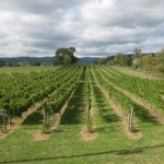 Philip Carter Winery Vineyards